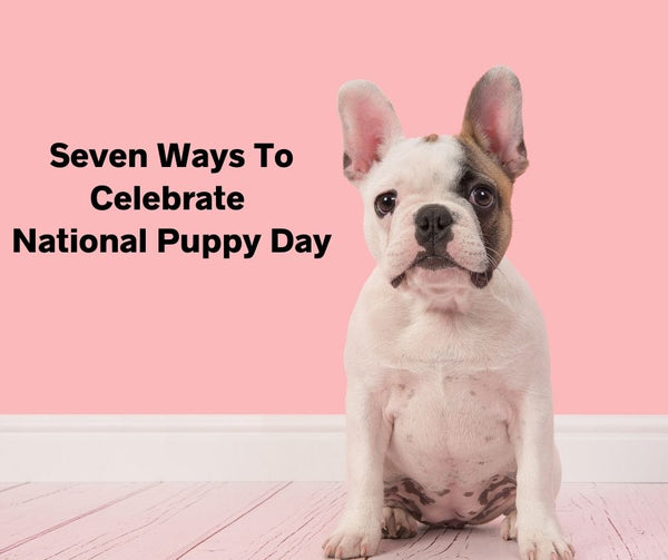 7 Ways To Celebrate National Puppy Day