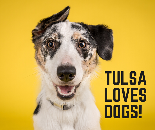 Dog Friendly In Tulsa, Oklahoma