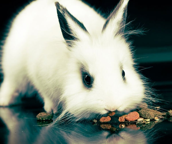 Small Animal Treats, Rabbit, Hamster, Mice, Gerbil
