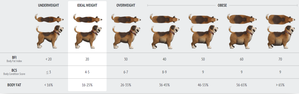 Is Your Dog Obese? Dog BFI, Dog Body Fat Index