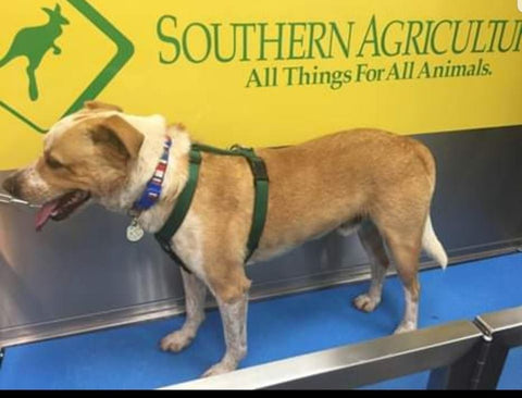 Self Serve Dog Wash In Tulsa, Oklahoma At Southern Agriculture