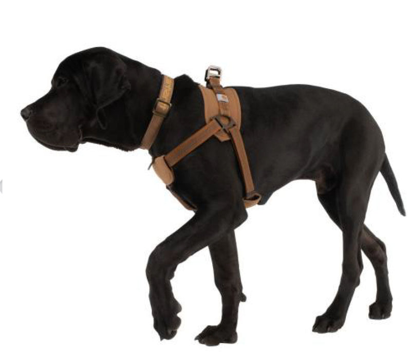 Carhartt Training Harness for Dogs - Southern Agriculture