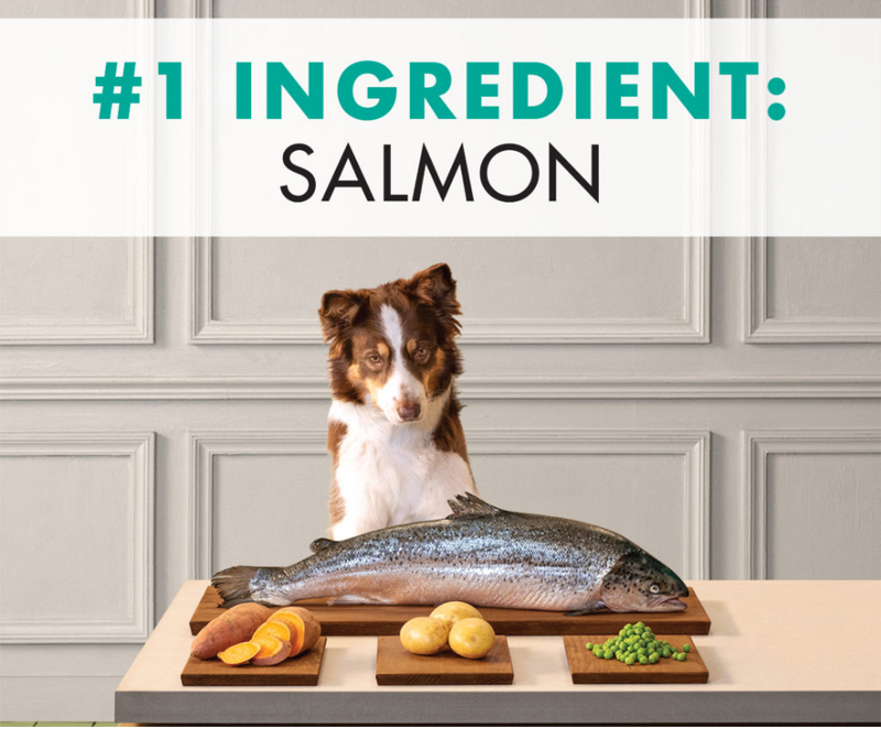 Canidae Grain Free PURE - All Breeds, Adult Dog. Real Salmon and Sweet Potato Limited Ingredient Recipe - Southern Agriculture