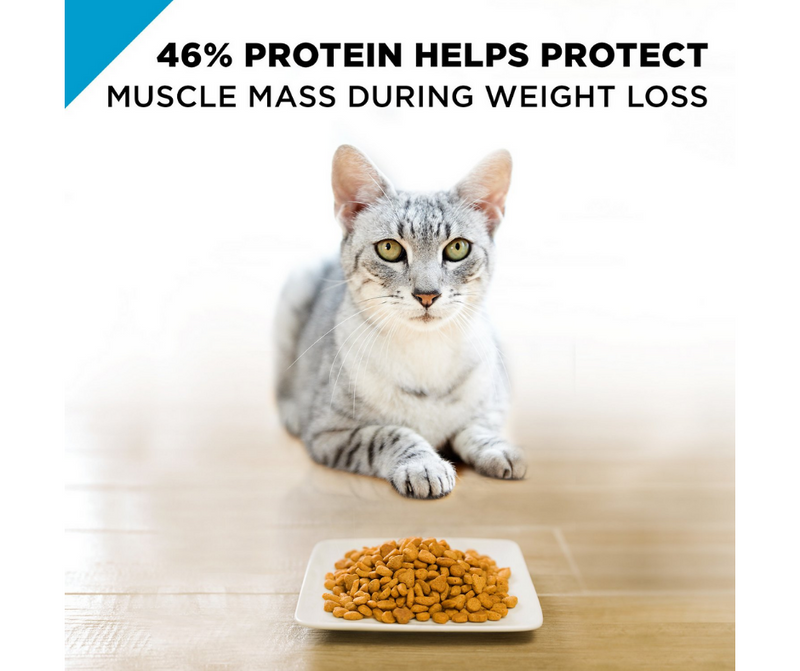 Purina Pro Plan FOCUS - All Breeds, Adult Cat Weight Management. Chicken & Rice Recipe - Southern Agriculture
