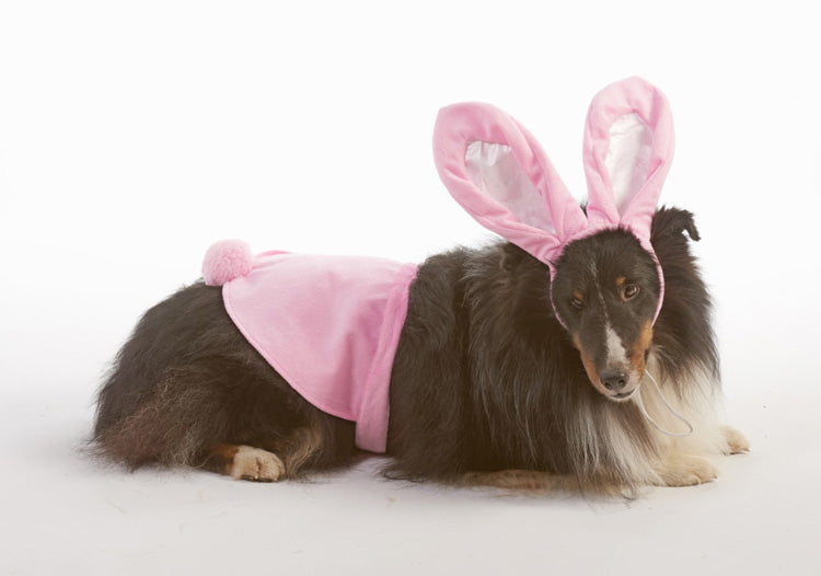 Bunny Costume For Dog - Southern Agriculture