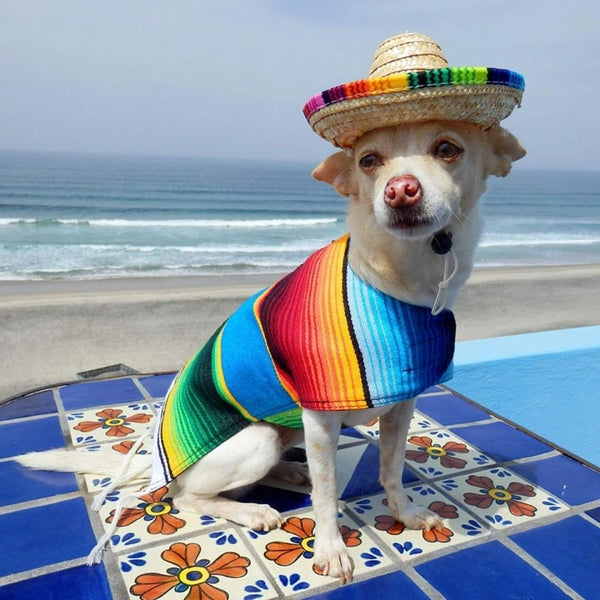 Sombrero for Dogs by Baja Ponchos