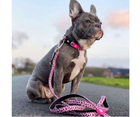 Max and Molly Smart ID Pink Leopard Adjustable Dog Collar