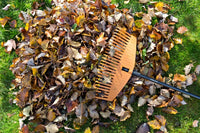 Autumn Cleanups will Pay Dividends in the Spring