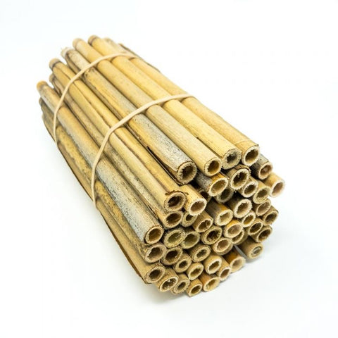 Natural Lake Reed Tubes for Mason Bees - 6 inches long, 8mm wide