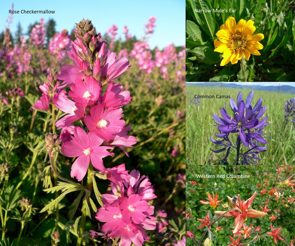 PT 458 Native Butterfly Nectar Wildflower Mix