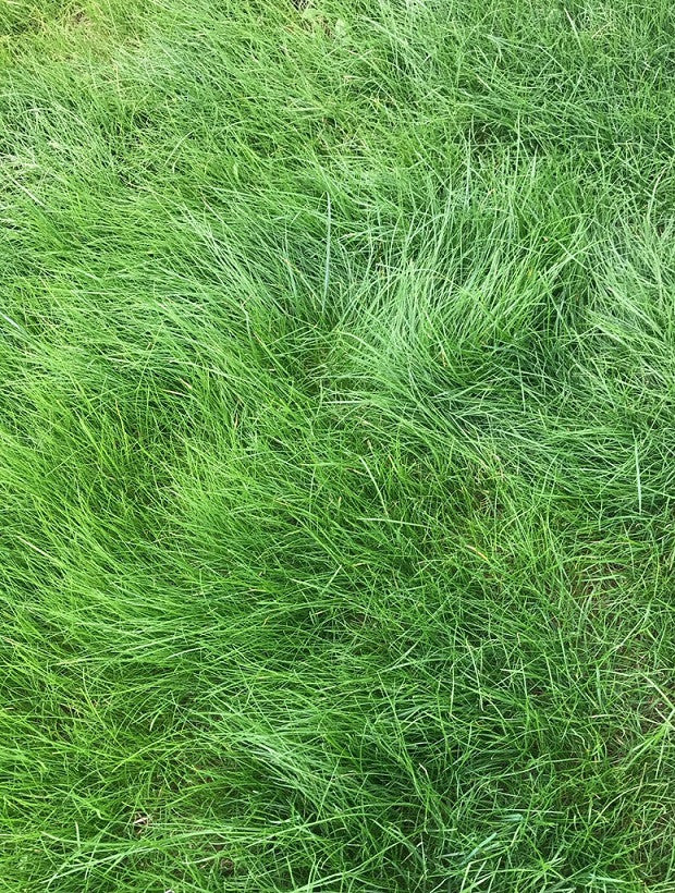 Pt 701 Let It Grow Grasses A No Mow Alternative Pro Time Lawn Seed