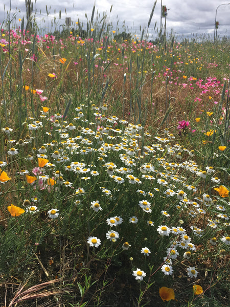 PT 710 Flowering Meadow Mix