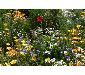 PT 656 Annual Wildflower Mix