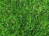 PT 769 R&R Eco-Turf Mix with Microclover®