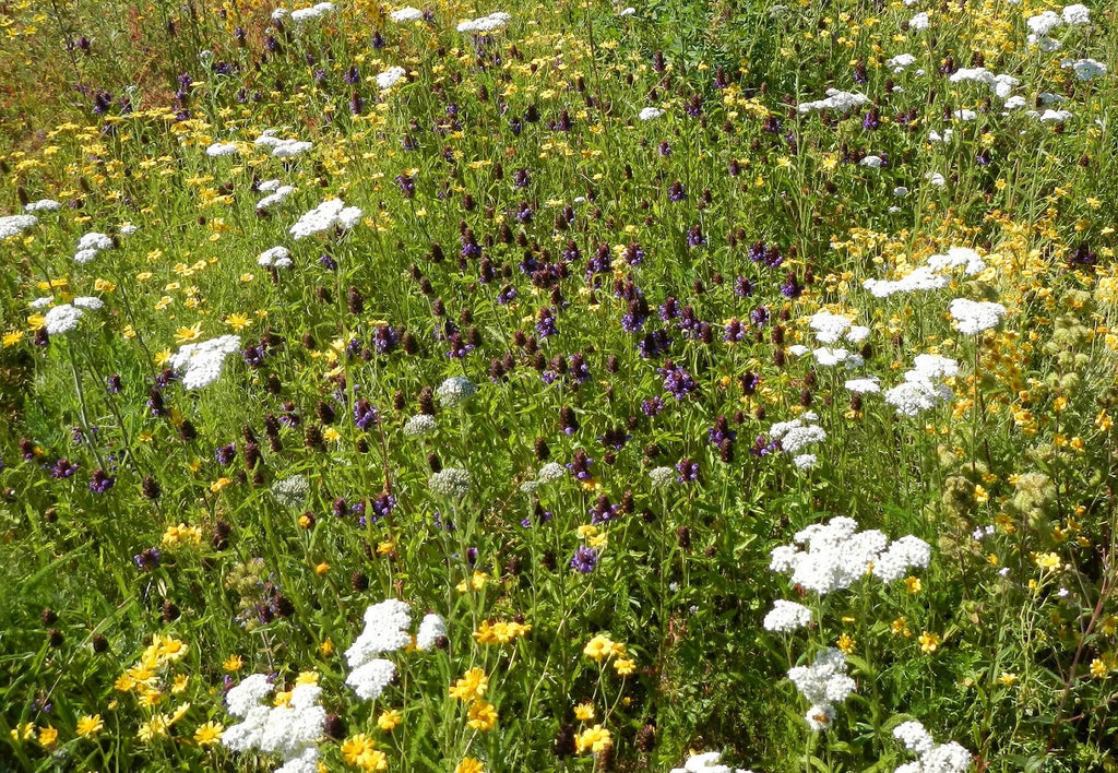 SOLD OUT- PT 457 Native Prairie Wildflower Mix - Sorry, check back in Sept!