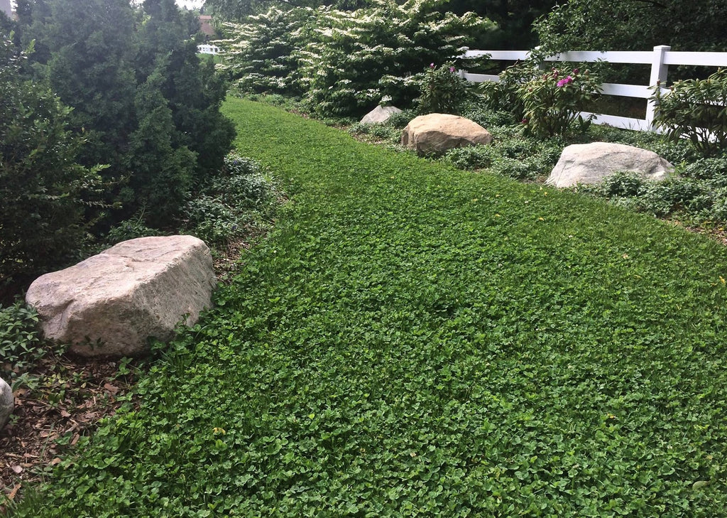 PT 767 Dog Park Eco-Lawn Mix with Microclover®