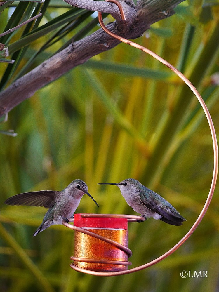 NEW! Copper Hummingbird Feeder