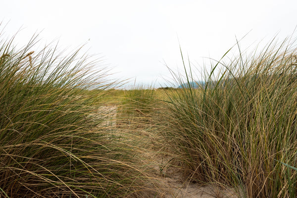 NEW! PT 101 Coastal Native Grass Mix