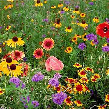 PT 658 Perennial Wildflower Mix