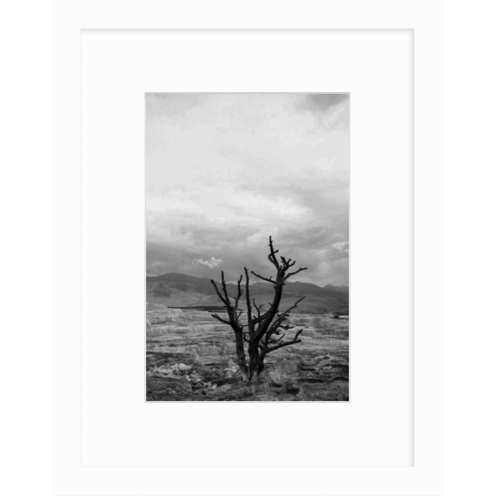 black and white print of solitude by cc and mike the shop