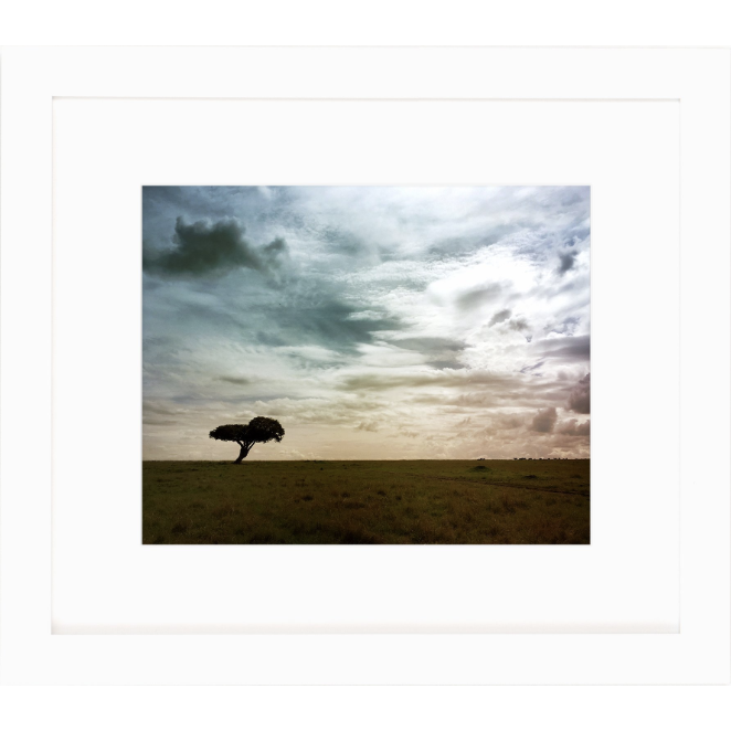 lone tree in the safari print by cc and mike the shop