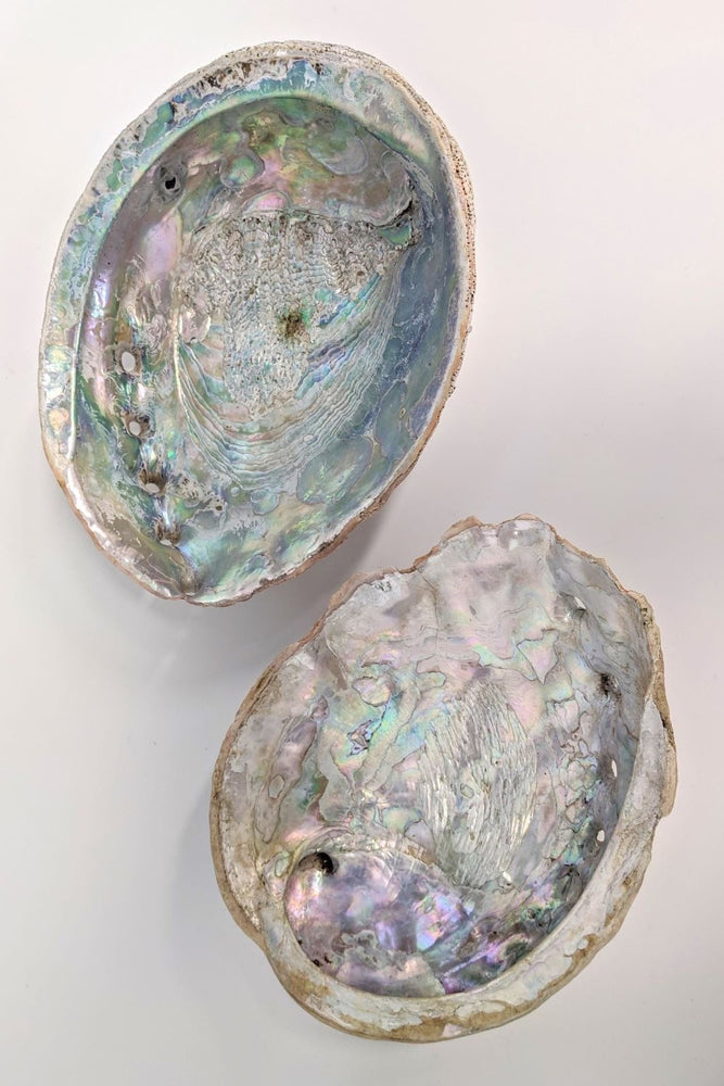 XL Abalone Offering Bowl