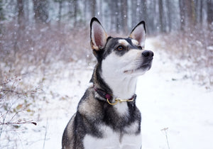The Daily Getup-Dog Collar-[curren_alte_text]-WanderDog Designs
