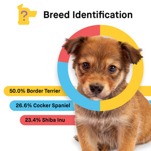 No Ship Breed Identification Kit
