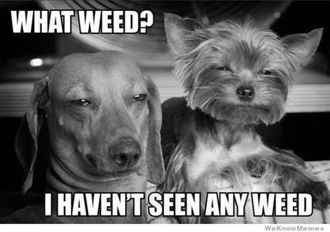 cute dogs stoned puppies havent seen any weed what weed? lol