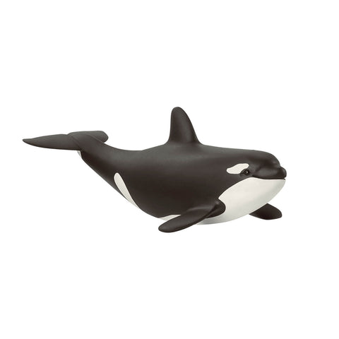 Baby Orca