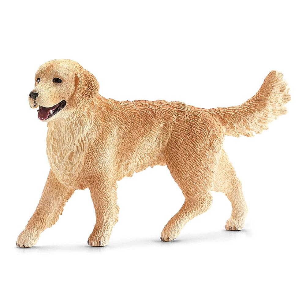 Golden Retriever, Female
