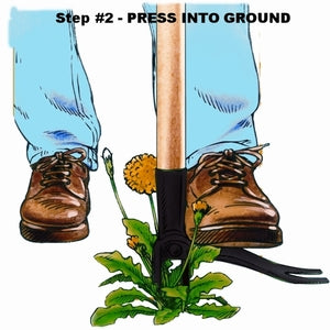 Press Grampa's weeder into ground. The easy way to get rid of weeds. Kills dandelions, thistles, crab grass, any weed with a tap root. The easy way to get rid of weeds in your garden.