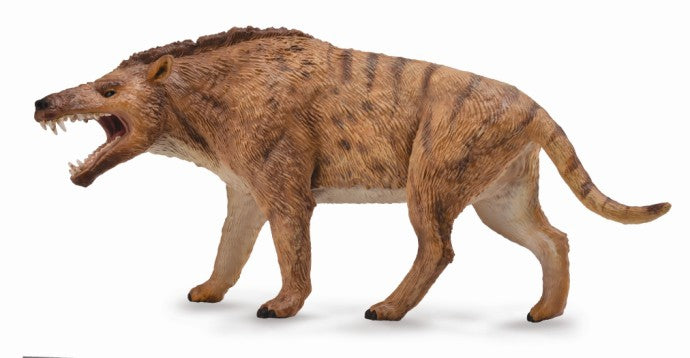 COLLECTA ANDREWSARCHUS