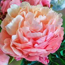 Load image into Gallery viewer, Pink Hawaiian Coral Bush Peony