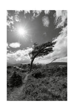 Load image into Gallery viewer, Wind Bent Tree II, Patagonia