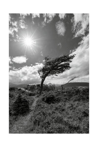 Wind Bent Tree II, Patagonia