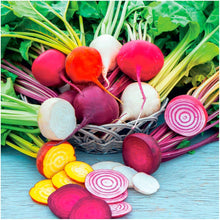 Load image into Gallery viewer, Seed Needs, Rainbow Beet Mixture (Beta vulgaris) (Amazon)