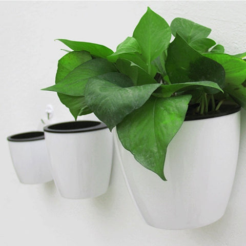 Image of Wall Hanging Flower Plants Pot