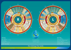 Integrated Iridology Iris Desk Chart