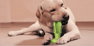 Dog Cleaning Molar Stick
