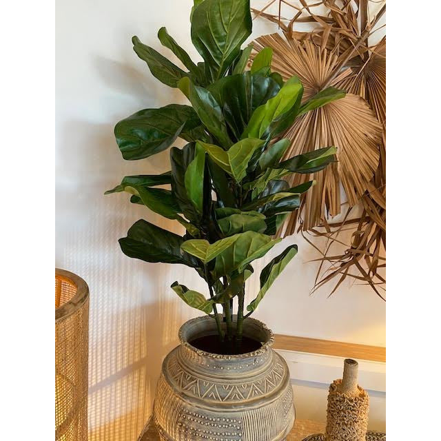 120cm fiddle leaf fig