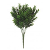 ALB boxwood bush 3068312