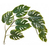 ALB monsteria leaf garland 3077212