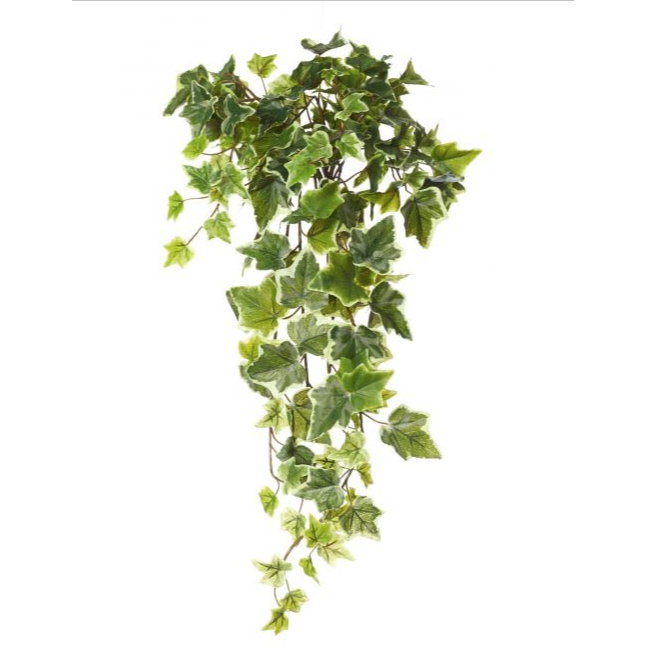ALB English ivy hanging 71cm/3045981