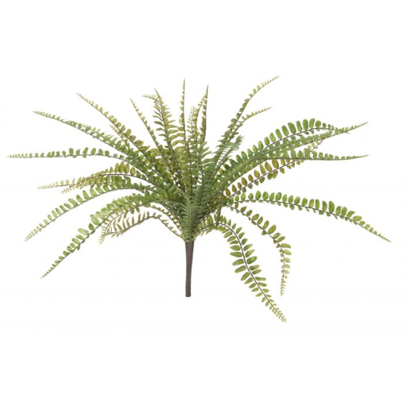 ALB fishbone fern 3069212