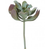 ALB kalanchoe single 3143112