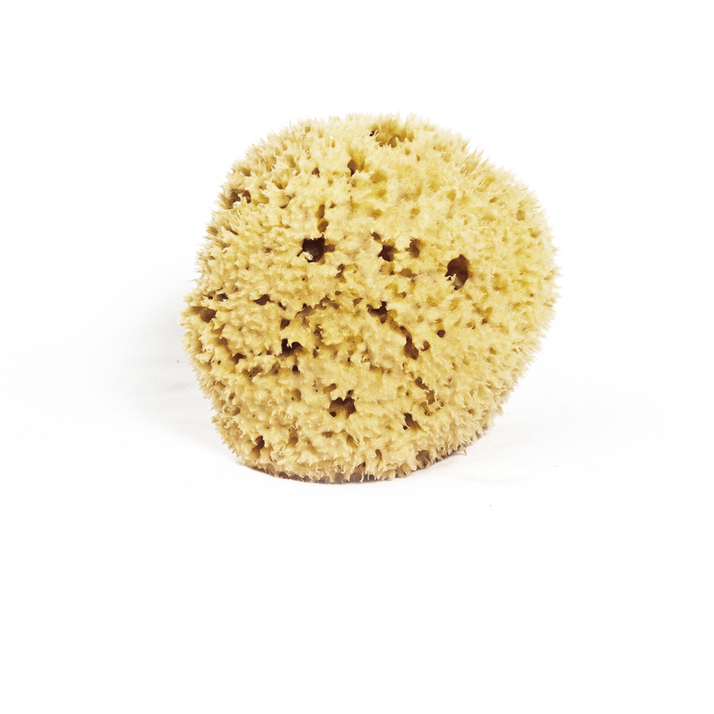 Car / Horse Organic Sea Sponge Meeka Body