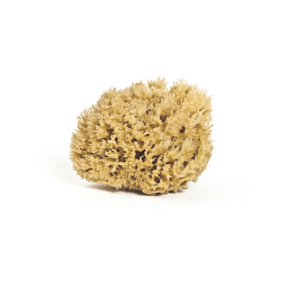 Organic Honeycomb Body Sea Sponge | Meeka Body