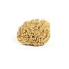 Organic Honeycomb Body Sea Sponge - Large | Meeka Body