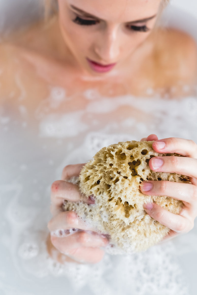 Honeycomb natural bathing sea sponge Meeka